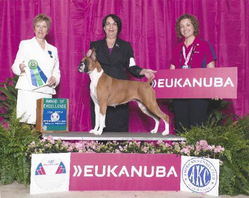 Akc Dog Shows Wisconsin