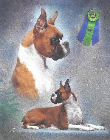 Quality Boxers And Labradors From Mypride Kennel